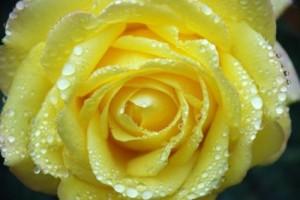 flower_bouquet_leaf_221411
